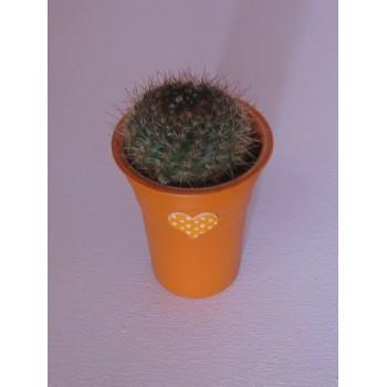 Cactus à l'oranger