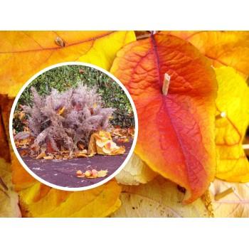 Les saisons: l'automne